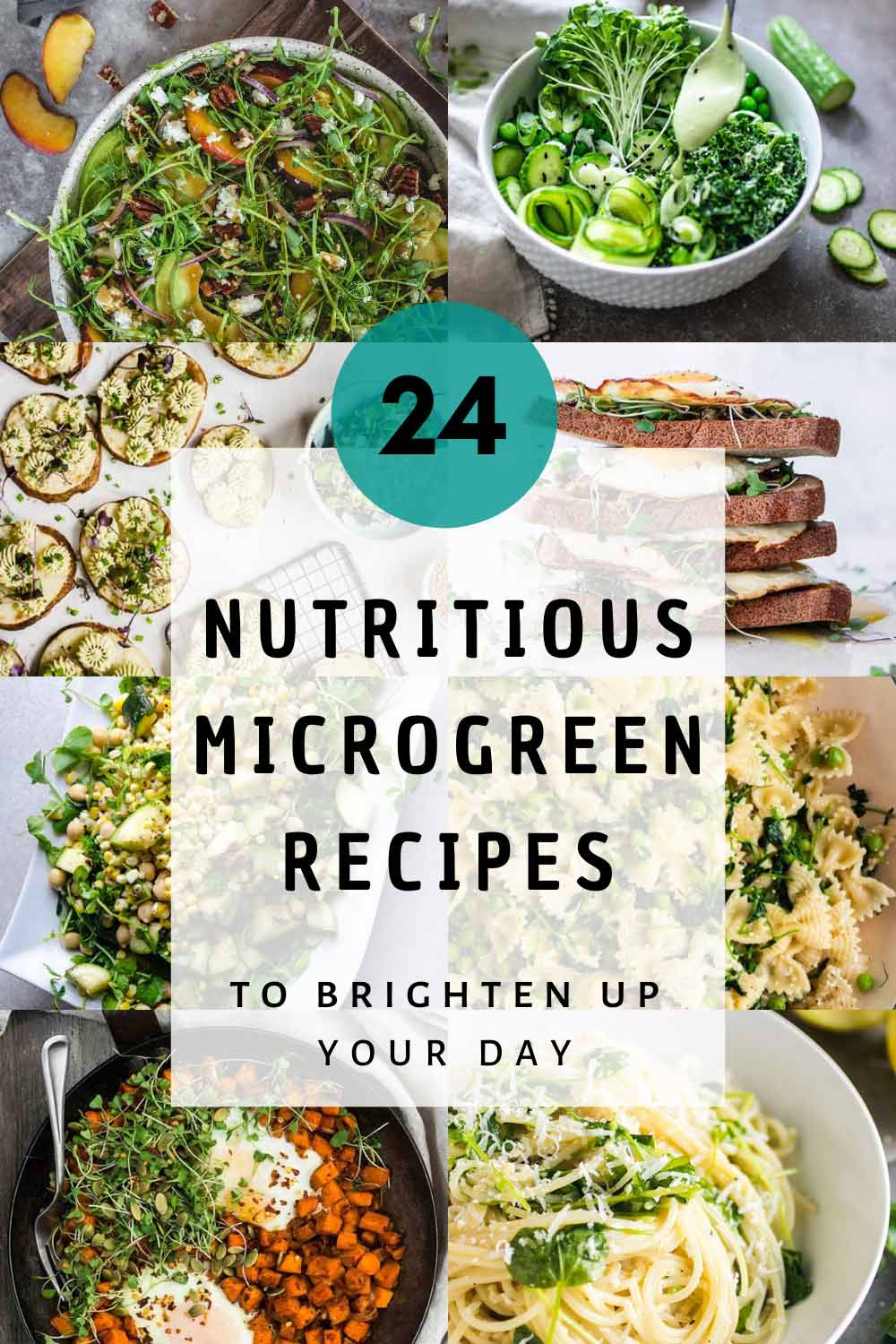 Microgreen recipes featured image